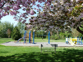 Cherry blossom trees at playground in Park