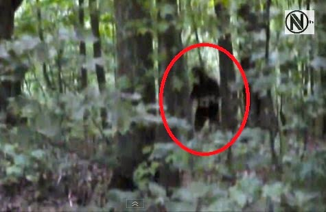 Blue Ridge Bigfoot