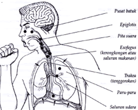 susu etawa mengatasi flek paru-paru