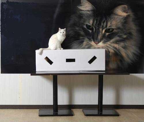 DIY貓咪塔屋 單箱