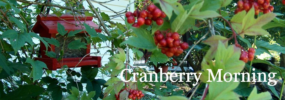 Cranberry Morning