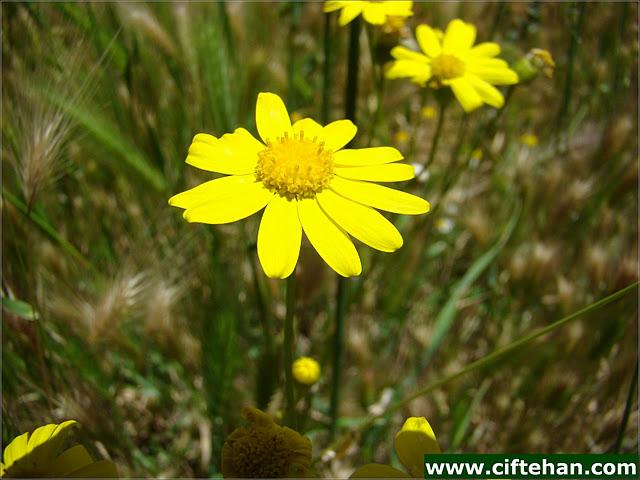 Çiçek resimleri güzel çiçek resimleri 2012 güzel çiçekler