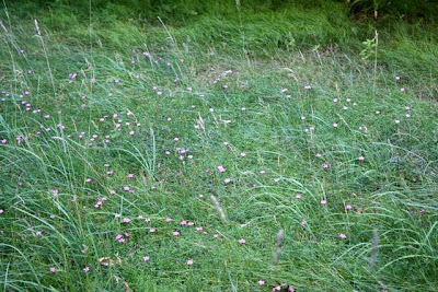 grass with wild flowers