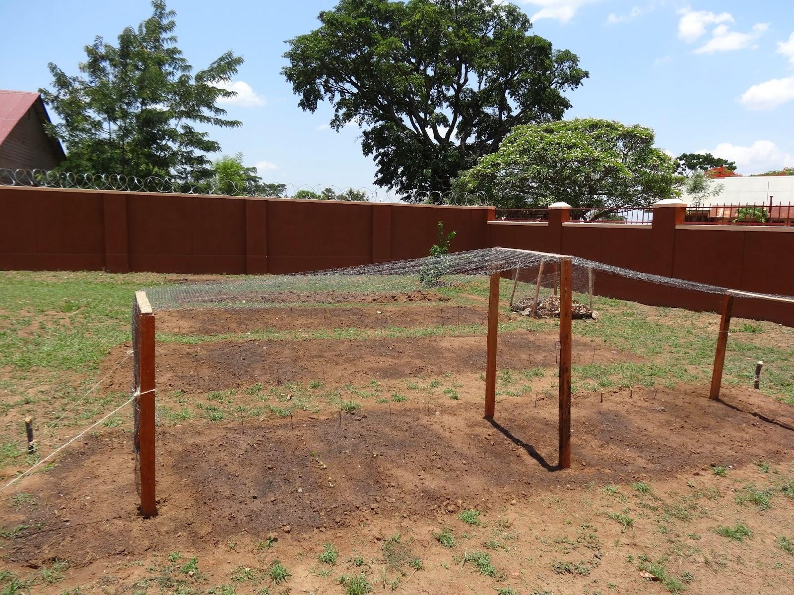 Word and Seed in Uganda: Sara\'s Garden