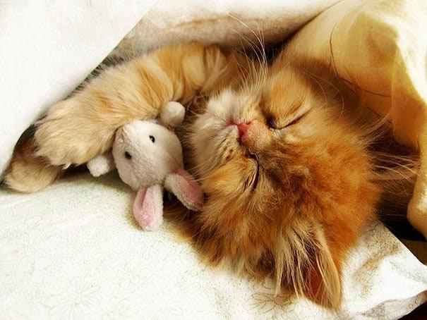 cat with stuffed animals