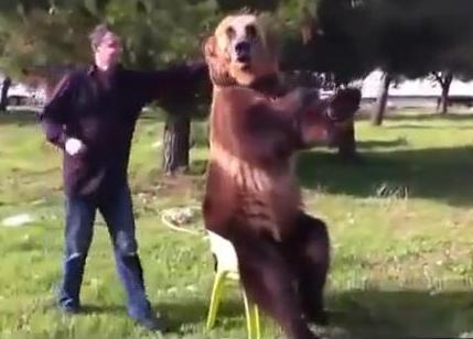 Видео: Мишка Тедди в реальной жизни