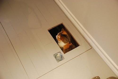 Una bandeja higi nica para gatos en el s tano de casa for Mueble arenero para gatos