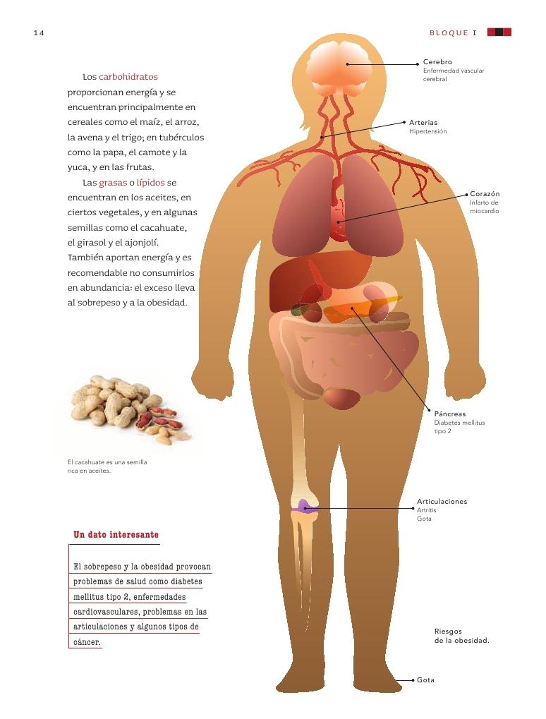 La dieta correcta y su importancia para la salud bloque for Que es una oficina y su importancia