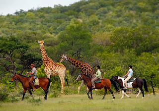 Safari in Africa, Holiday in Africa, World Tour, vacation in paradise, holiday in paradise, scuba diving, spa, yoga