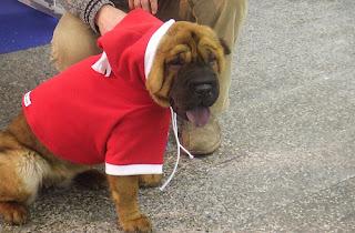 Perro+navide%C3%B1o Imagenes chistosas de perros navideño