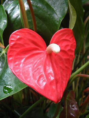 heart shaped nature photos