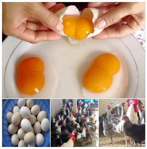 Trứng gà hai lòng đỏ 4,5k /1q