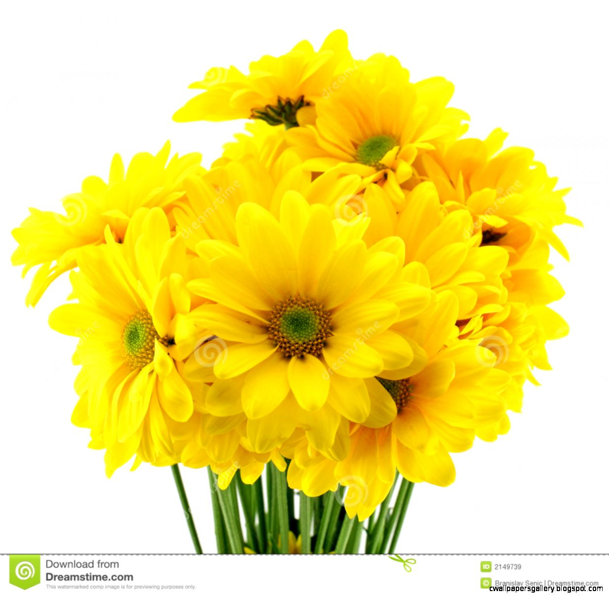 yellow flowers images 11