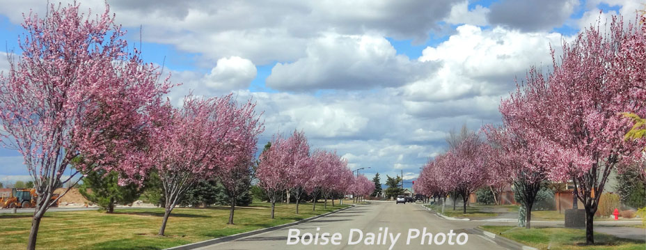 Boise Daily Photo