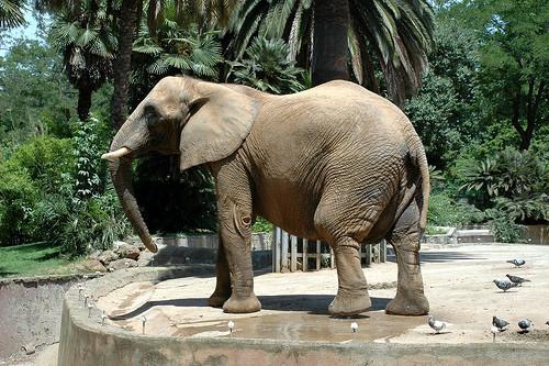 mueren elefante: