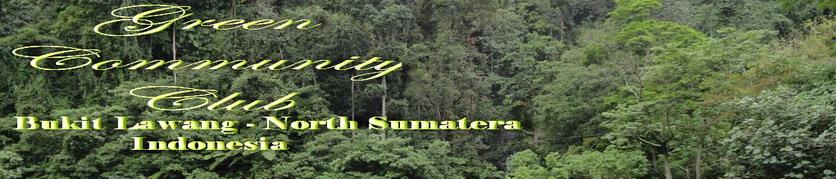 THINGS to SEE and DO in BUKIT lawang  l  GREEN COMMUNITY  l Bukit Lawang - Sumatera l  Indonesia