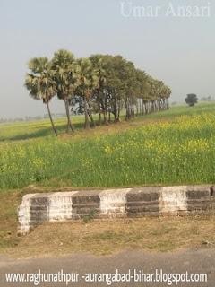 Raghunatpur 's berewa photo of aurangabad