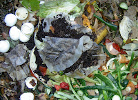Compost in Your Yard