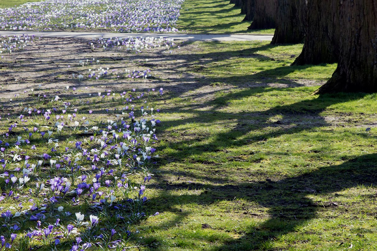 trees and crocuses