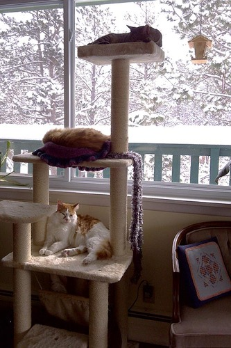 Armarkat Cat Tree Model A6501 Most Sturdy Cat Condo