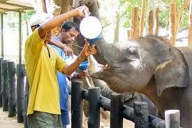 Toen hij ook nog - heel ongebruikelijk - de olifantjes melk mocht geven kon zijn dag niet meer stuk.