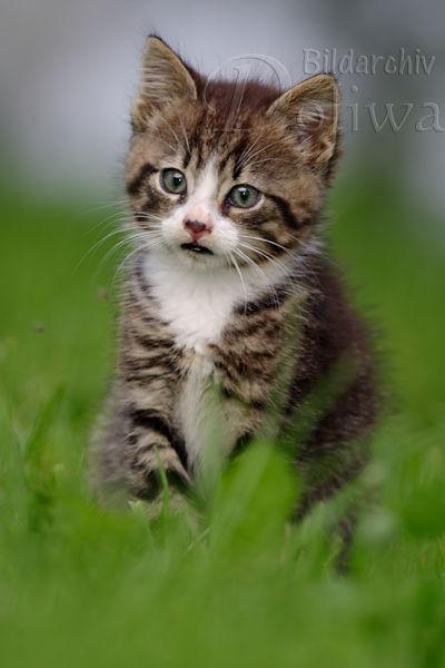Cute Pussy Cat 28