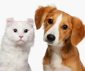 convivencia de perros y gatos