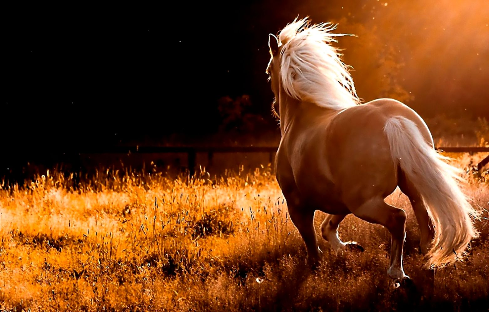 Download Name Nature Running Wild Horses Widescreen Wallpaper