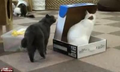 gambar kucing jail 1