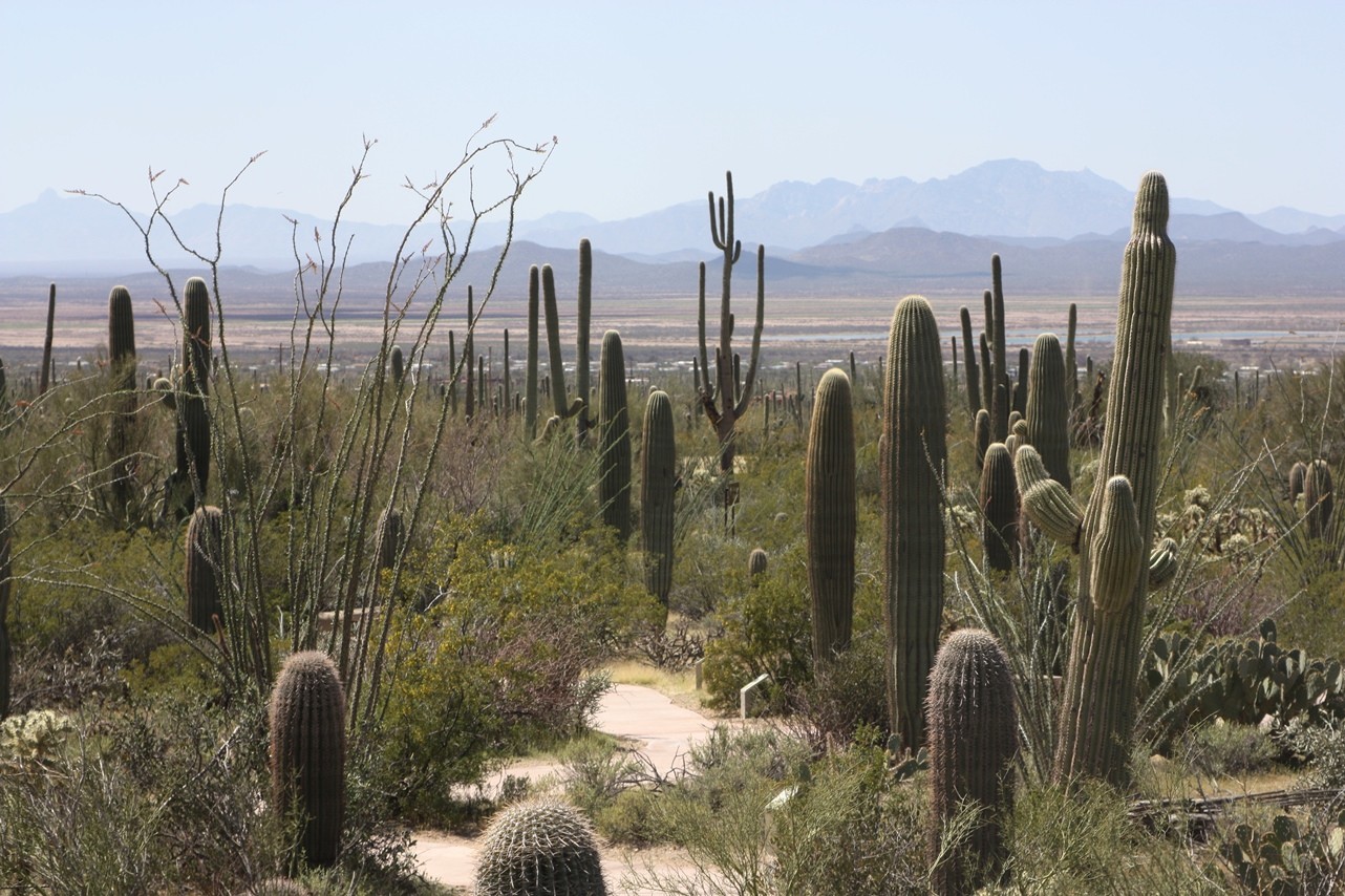 The Pyrlik Family RV Trips Tucson and the Sonoran Desert