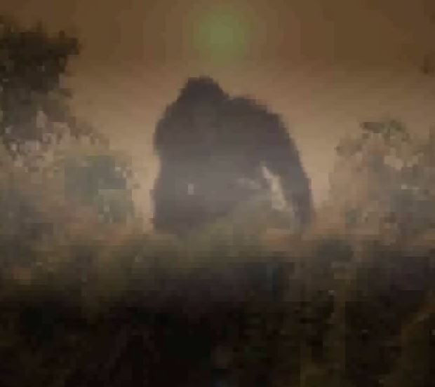 bigfoot in search of the truth Bigfoot's been a busy beastie recently but first some background on the search for bigfoot evidence the truth behind the shroud of turin.
