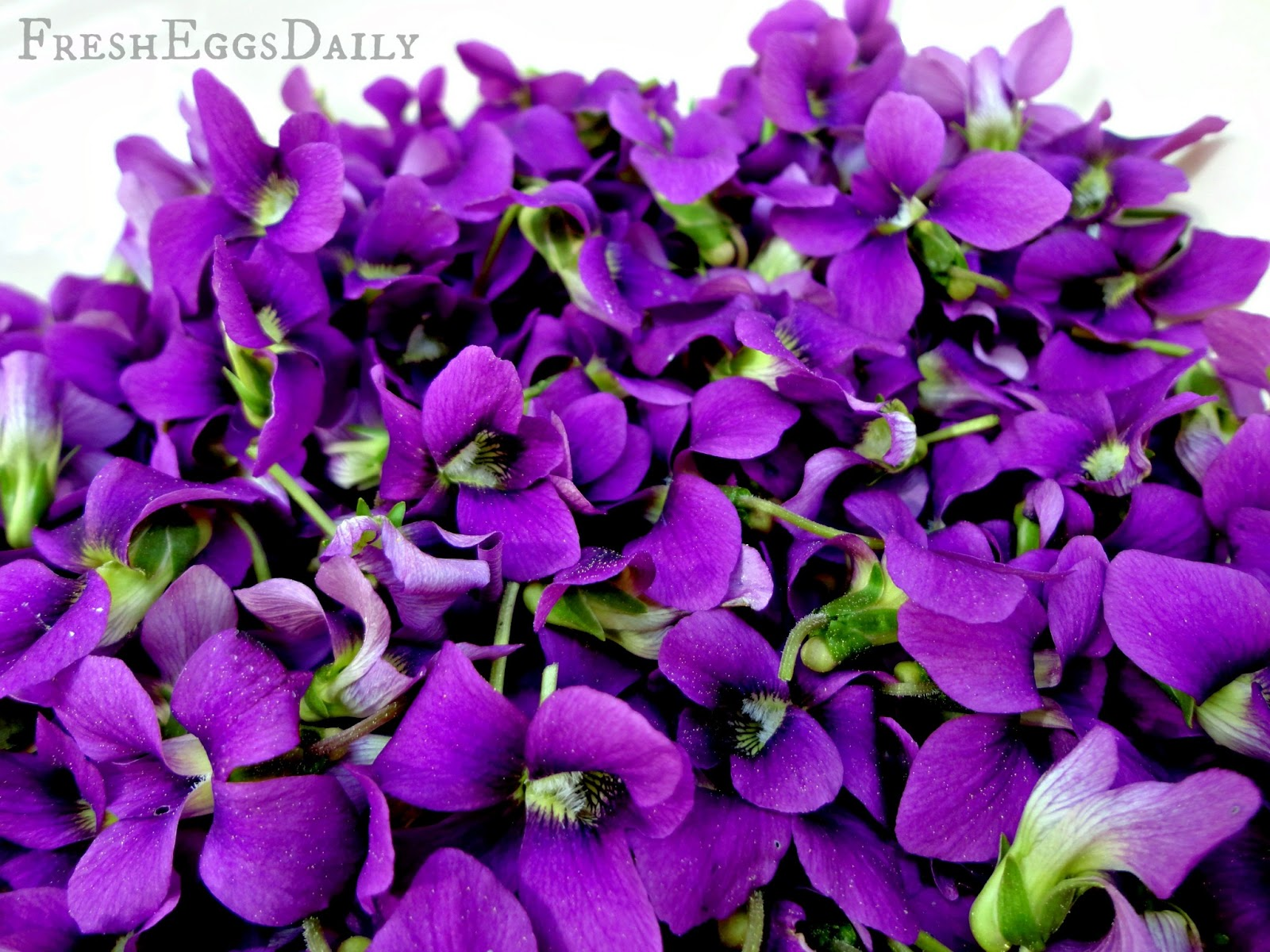 The Incredible Edible Violet - Homemade Violet Soda ...