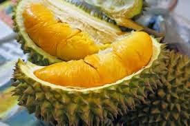 Buah Durian , Khasiat Durian , Musim Durian , Durian