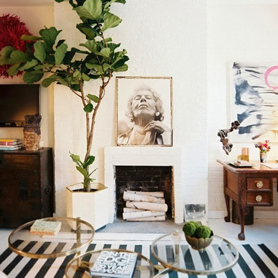 about 2 years late on a trend here fiddle leaf figs have been all over the pages of every magazine and blog known to man or at least it feels like it