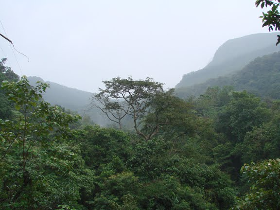 sripada forest from Ratnapura root