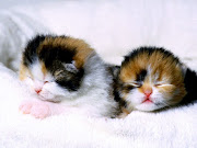 cute cats in this world cute cat cats