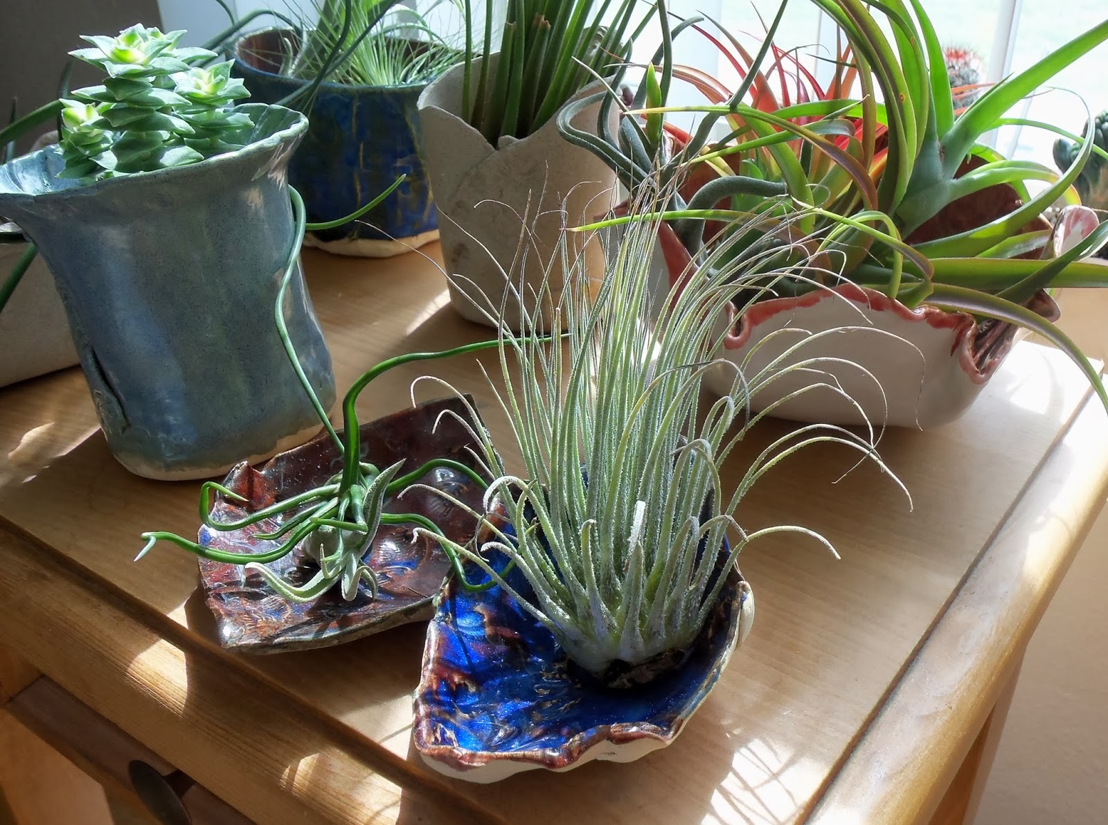 My Life Among The Lithops And Other Strange Plants: weird plants to grow indoors