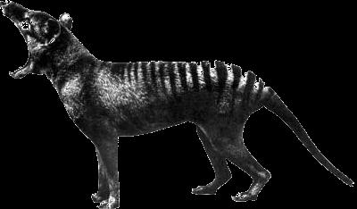 Ye Olde Civet Cat