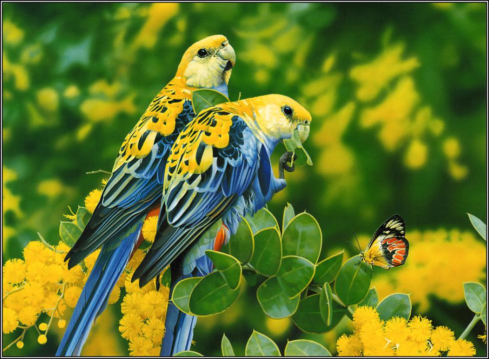 Wallpapers hd desktop wallpapers free online beautiful for Amazon wallpaper