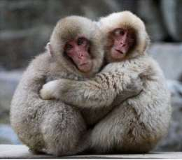 Две мартышки сидят в обнимку