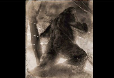 Darkness Radio  Dr. Jeff Meldrum Bigfoot