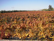 funny pic time. the vines. If you go in the summer they leave some of the .