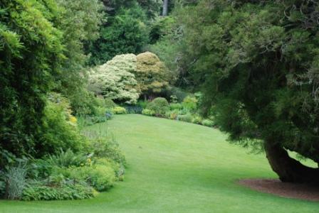 Vakre trær til hagen