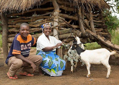 Heifer International.org
