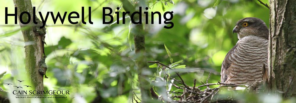 Holywell Birding
