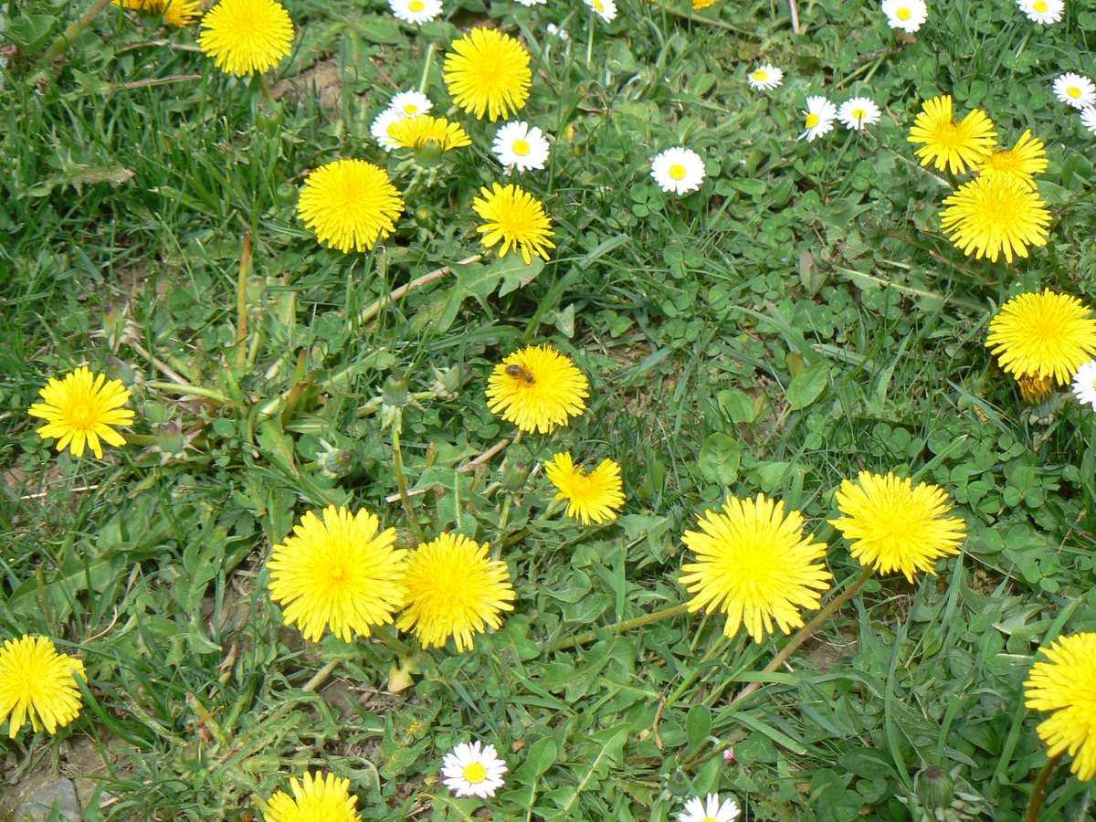 T te de l 39 art avril 2011 - Plante a fleur jaune 6 lettres ...