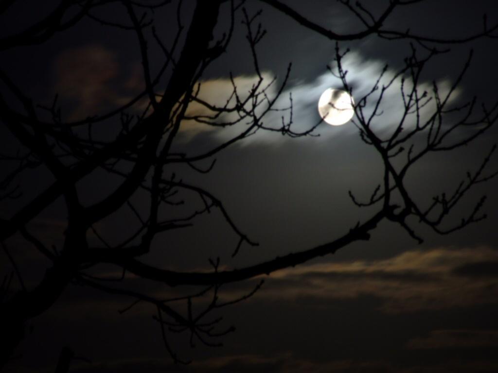 Dark Night Moon Trees
