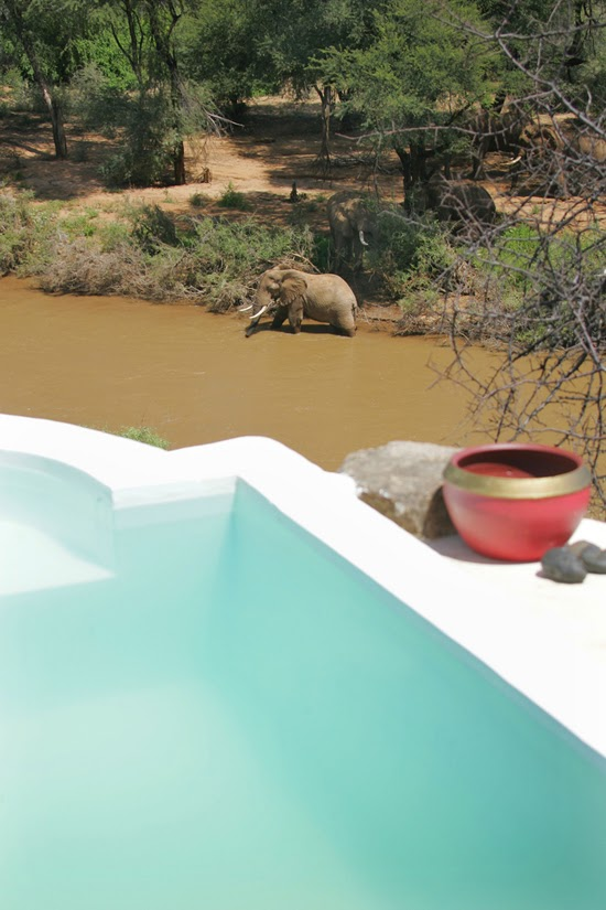 Safari Fusion blog | ake a dip | Wildlife viewing from Sasaab, Samburu land Kenya