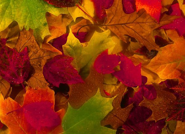 Autumn Colors Acrostics7