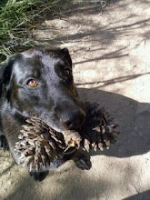 Sadie scored the double pine-cone branch!